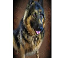 ☝ ☞ GERMAN SHEPARD IPHONE CASE☝ ☞ by ╰⊰✿ℒᵒᶹᵉ Bonita✿⊱╮ Lalonde✿⊱╮