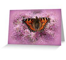 Tortoiseshell Butterfly on Pink Sedum. Greeting Card