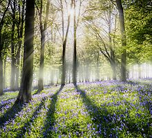 Bluebells in the mist by Ian Hufton