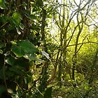 Fairy Woods by damianaashe