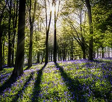 Magic Wood by Ian Hufton