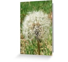 Don't Sneeze! Greeting Card
