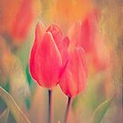 A Red Tulip Moment by ArtofOrdinary