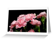 Pink Carnations Greeting Card