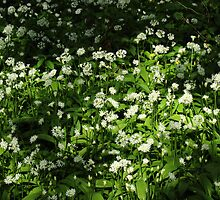 Wild Garlic by Artberry
