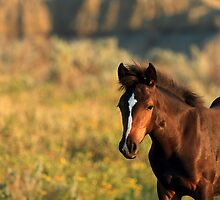 Sunlit Foal by J. L. Gould