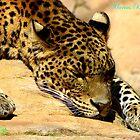 Cat Nap by mariusvic