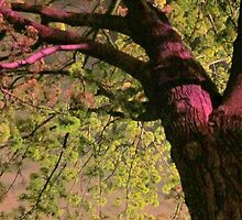Something About The Trees by Guy Ricketts