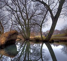 Willow Reflections by Keld Bach