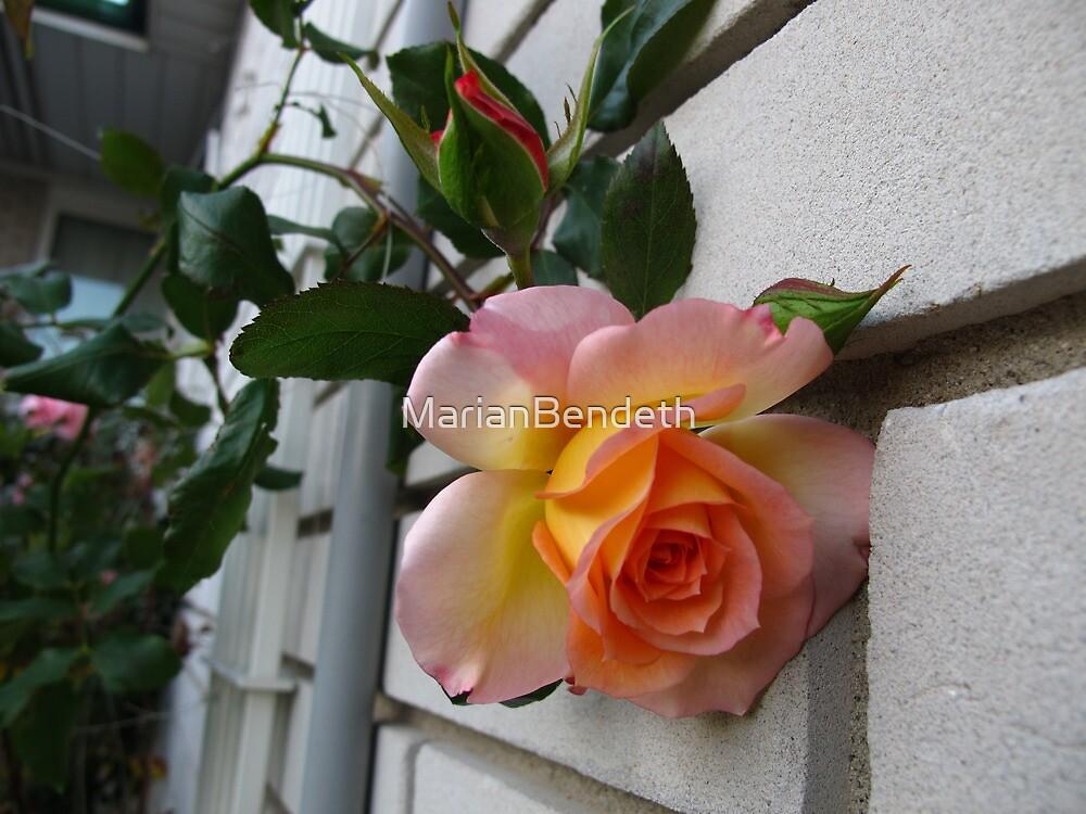 Wall flower by MarianBendeth