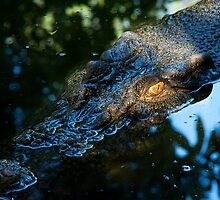Crocodile by JeanNieman