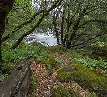 South Fork American River I by Richard Thelen