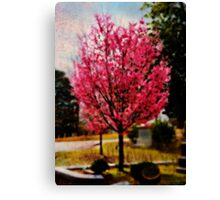 Cherry Blossom in Oils Canvas Print