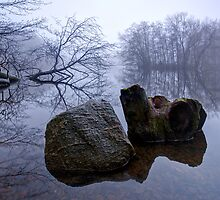 Rock and Stump by Keld Bach