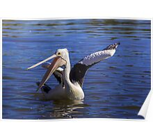 Please to see  you  Happy Pelican Poster