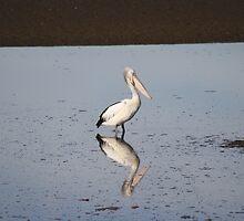 Pelican Resting by TassieTigress