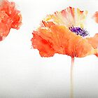 Poppy Trio by Ruth S Harris