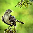 """Pretty Mocking Bird"" by Melinda Stewart Page"
