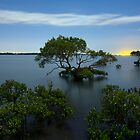 Cleveland Mangroves by Peter Doré
