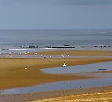 Sandy Seascape by TassieTigress