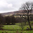 Farndale in Spring by redown