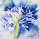 Agapanthus 1 by Ruth S Harris