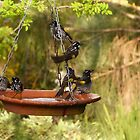 I&#x27;ts Bath Time! New Holland Honeyeaters, Mount Pleasant. S.A. by Rita Blom