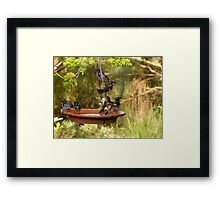 I'ts Bath Time! New Holland Honeyeaters, Mount Pleasant. S.A. Framed Print
