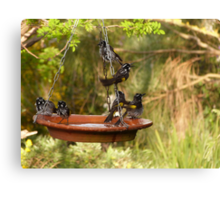 I'ts Bath Time! New Holland Honeyeaters, Mount Pleasant. S.A. Canvas Print