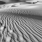 Shadows on Mesquite Dunes by John Chandler