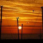 Birds On A Wire by Rocksygal52