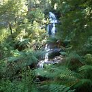 Triplet Falls - Otway National Park - Victoria - Australia by Kay Cunningham