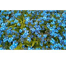 Forget me not! Photographic Print