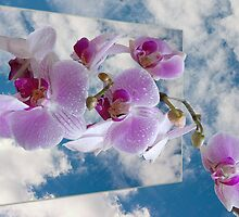 1174-orchid in the clouds by elvira1