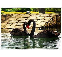 Heart by Black Swans Poster
