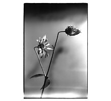 still life 1 Photographic Print