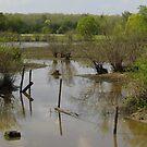 Muddy Swamp by WildestArt