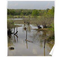 Muddy Swamp Poster