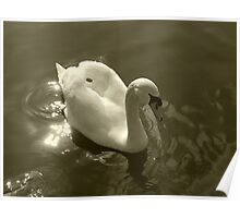 The Lonely Swan Poster