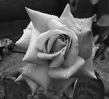 Rose in Black and White by LoneAngel