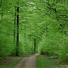 Beech wood in May by Trine