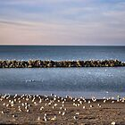 Break Wall on Lake Erie by sherln
