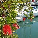 A pretty corner in the marina by Sue Gurney