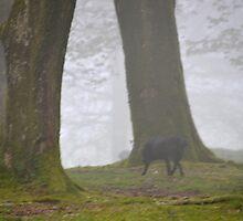 Misty Woodlands Shadows by lynn carter