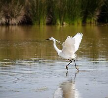 Little Egret knows how to walk on water by 29Breizh33