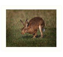 Hare On The Hop Art Print