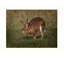 Hare On The Hop Art Print