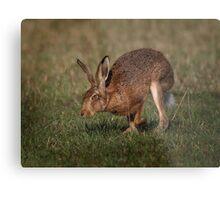 Hare On The Hop Metal Print