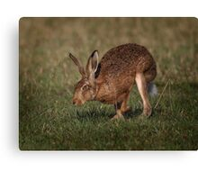 Hare On The Hop Canvas Print