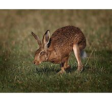 Hare On The Hop Photographic Print